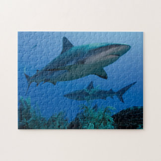 Caribbean Reef Shark Jardines de la Reina Jigsaw Puzzle