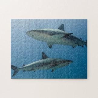 Caribbean Reef Shark Jigsaw Puzzle