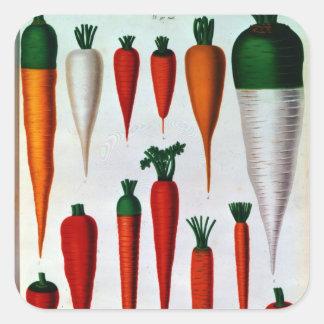 Carrots Square Sticker
