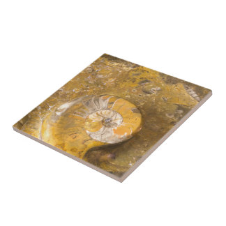 Carved Bowl Made of Fossils in Rock Closeup Photo Tile