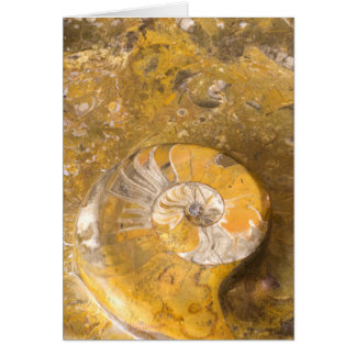 Carved Bowl Made of Fossils in Rock Photo Card
