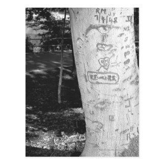 Carving on birch tree trunk B&W Postcard