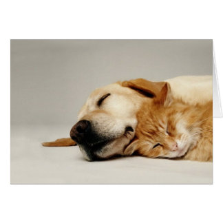 Cat and dog sleeping together... card