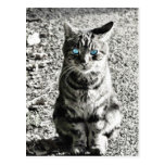 Cat Animal Pet Post Cards