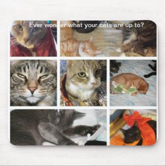 Cat Antics Mousepad