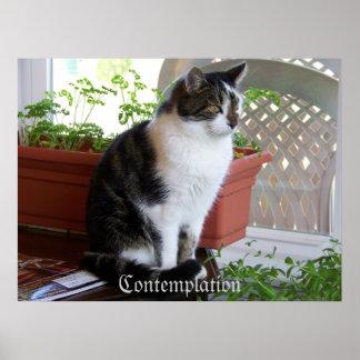 cat Contemplation poster