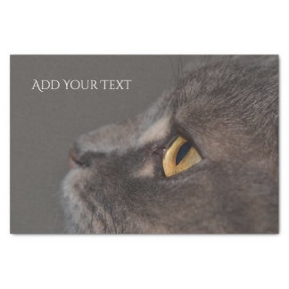 Cat Eye-Macro by Shirley Taylor Tissue Paper