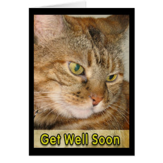 cat get well  soon card