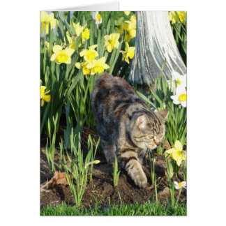 Cat, Hide or Play, Birthday Card