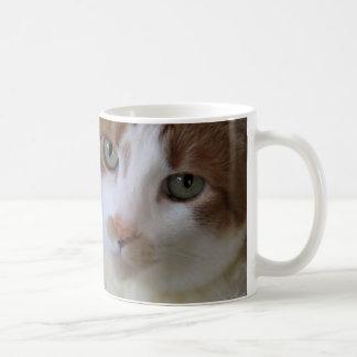 Cat in lacy collar coffee mug