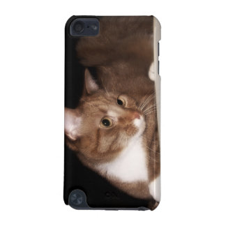Cat in Soft Light iPod Touch (5th Generation) Cover