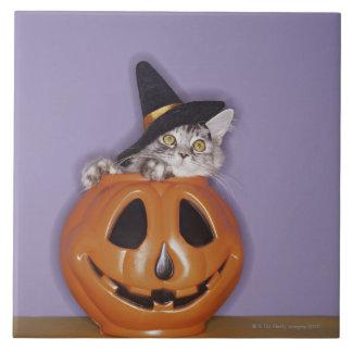 Cat in witch hat inside pumpkin tile