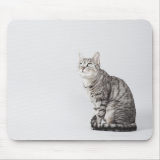 Cat looking up mouse pad