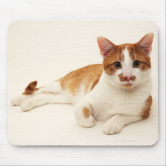 Cat on white background mouse pad