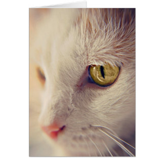 Cat Portraits Greetings Cards