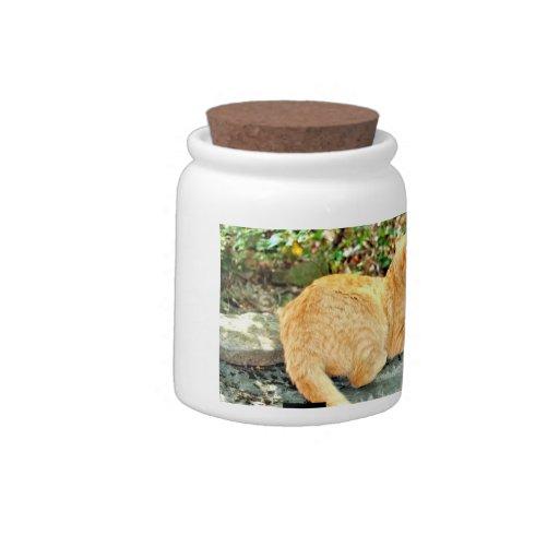 Cat Treat Jar Candy Jar
