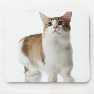 Cat with short feet mouse pad