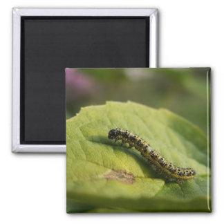 Caterpillar Magnet