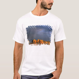 Cathedral Rocks in Sedona Arizona T-Shirt