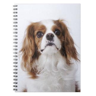 Cavalier King Charles Spaniel Notebook