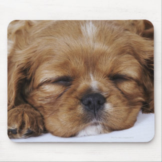 Cavalier King Charles Spaniel puppy sleeping Mouse Pad