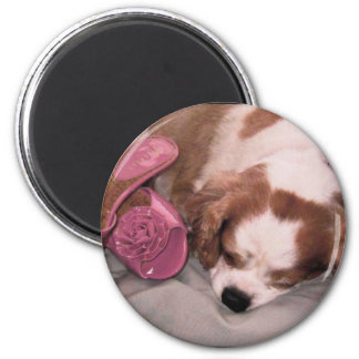 cavelier shoes 6 cm round magnet