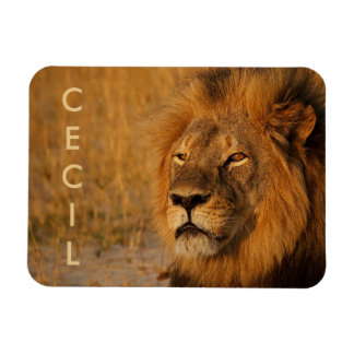 Cecil the Lion from Africa Rectangular Photo Magnet