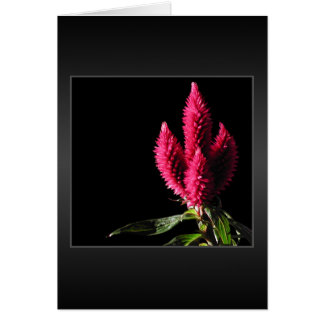 Celosia Caracas. Cockscombs. Pink Flowers. Card