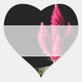 Celosia Caracas. Cockscombs. Pink Flowers. Heart Sticker