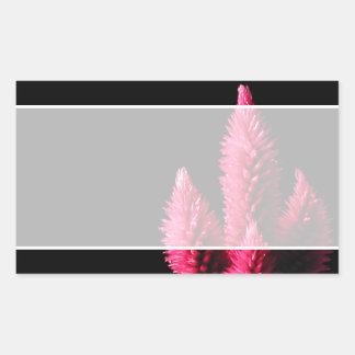 Celosia Caracas. Cockscombs. Pink Flowers. Rectangular Sticker