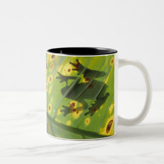 CENTRAL AMERICA, Costa Rica, Back-lit frog on Two-Tone Coffee Mug