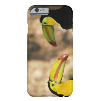 Central America, Honduras. Keel-billed Toucan 2 Barely There iPhone 6 Case