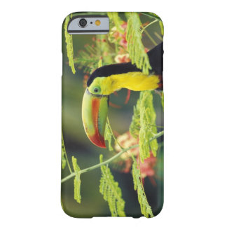 Central America, Honduras. Keel-billed Toucan Barely There iPhone 6 Case