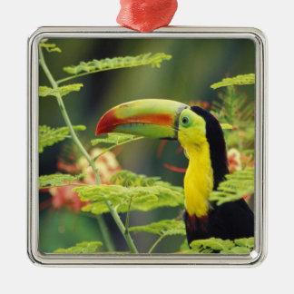Central America, Honduras. Keel-billed Toucan Christmas Ornament