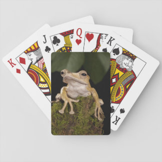 Central PA, USA,. Borneo Eared Frog; Playing Cards
