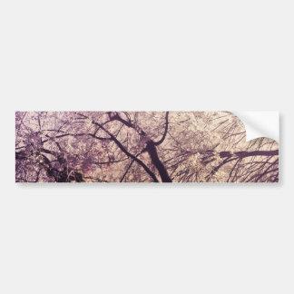 Central Park Spring Trees Bumper Sticker