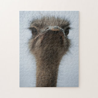 Central South Africa, African Ostrich, Close-up Jigsaw Puzzle