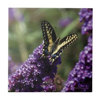 Ceramic Tile - Butterfly on Purple Flowers
