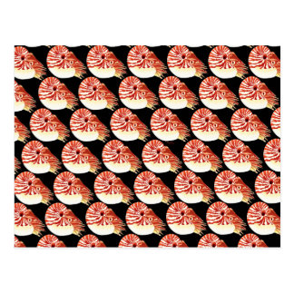 Chambered Nautilus Pattern in black Postcard