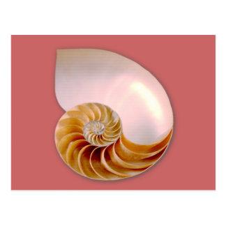 Chambered Nautilus Postcard