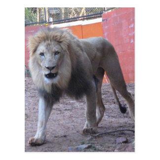 Charging Lion Postcard