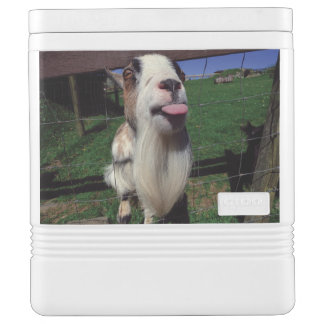 Cheeky Goat Igloo Container Chilly Bin