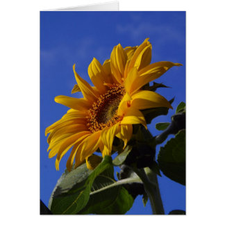 Happy birthday nature lover gifts t shirts art posters for Cheerful nature