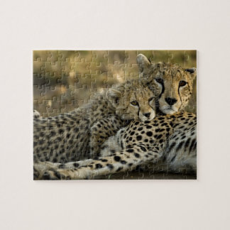 Cheetah, Acinonyx jubatus, with cub in the Masai 2 Jigsaw Puzzle