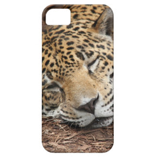 Cheetah Closeup, iPhone Case