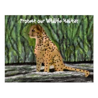 Cheetah Habitat Postcards