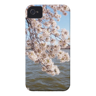 Cherry Blossom iPod Case