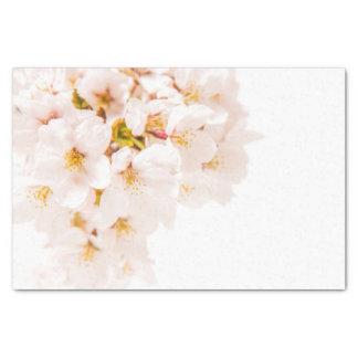 Cherry Blossom Tissue Paper