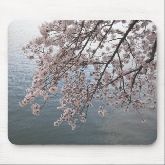 cherry blossoms over tidal basin mouse pad