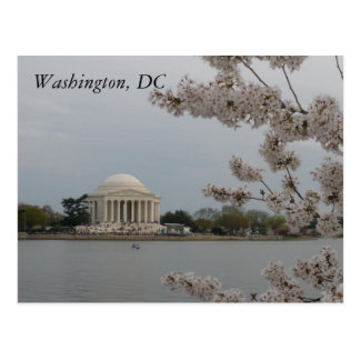Cherry Blossoms: Washington, D.C. Postcard